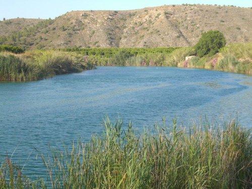 Riu baixant de l'Assut de Carcaixent