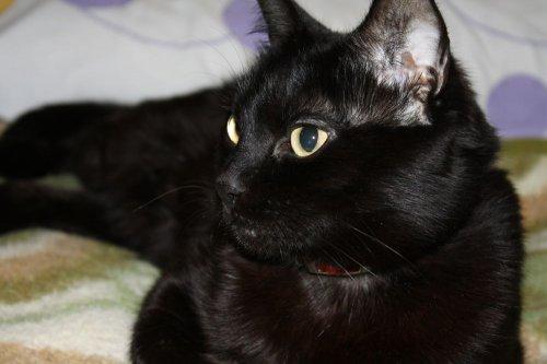 """El meu gat """" Ninu"""""""